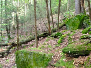 Enders State Forest 2