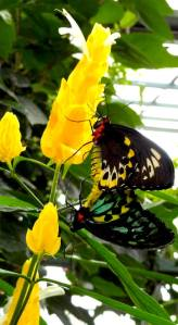 Spring Flower and Butterflies